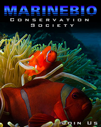 Support the MarineBio Conservation Society