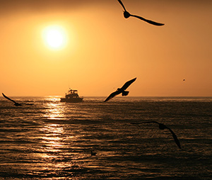 essays in wildlife conservation org sunrise off san diego ca is proud to present essays on wildlife