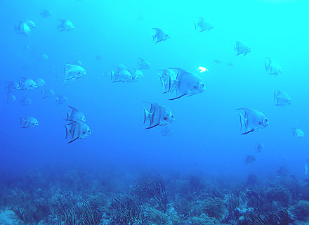 This area is packed with ocean life because of the sunlight that penetrates