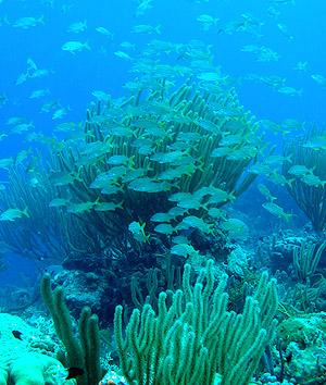 School of fish around soft corals