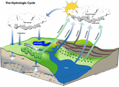 ecological cycle