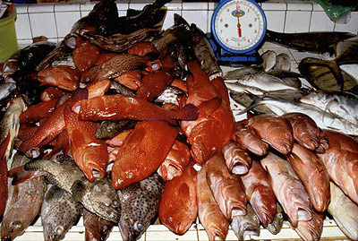 Ocean resources for Sea world fish market