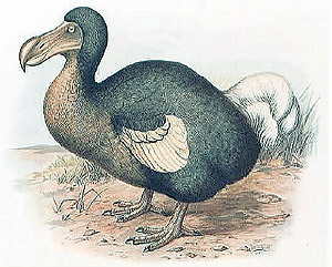 essays in wildlife conservation org dodo bird