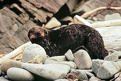 Wildlife and pollution - MarineBio.org