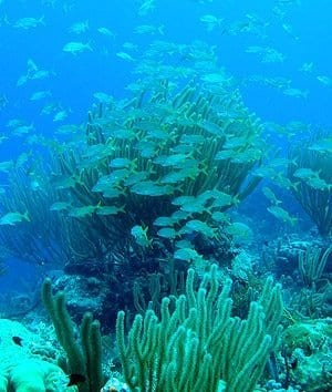 Coral reef off Florida