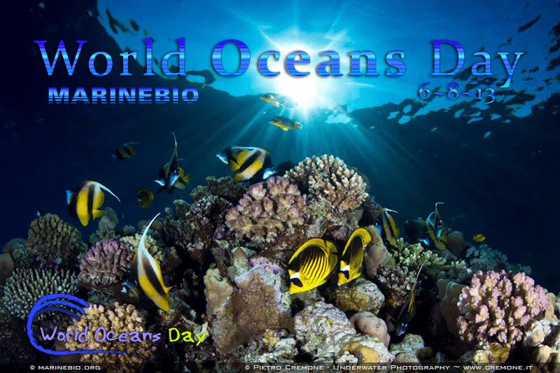 World Oceans Day 2013