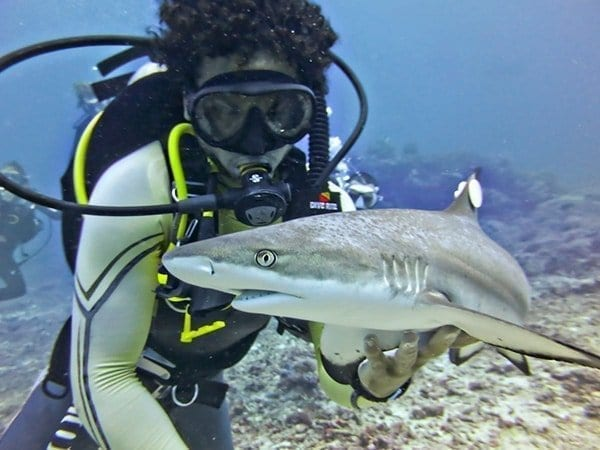 diver with blacktip shark