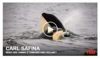 safina - what do animals think and feel