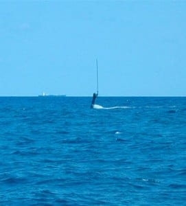 periscope off Florida