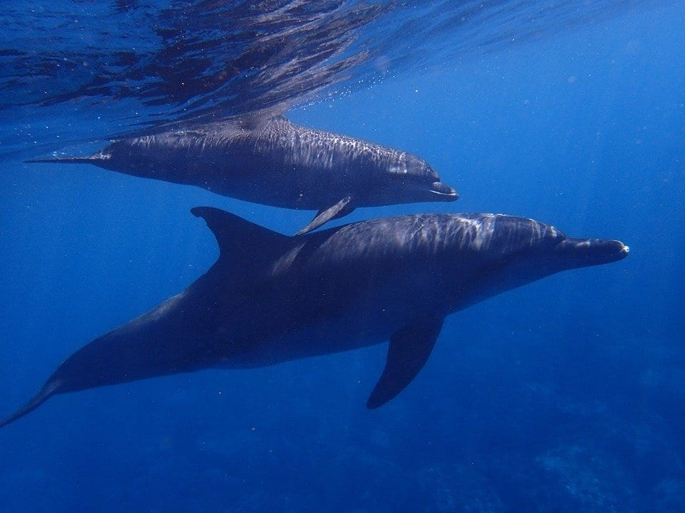 Mother with calf