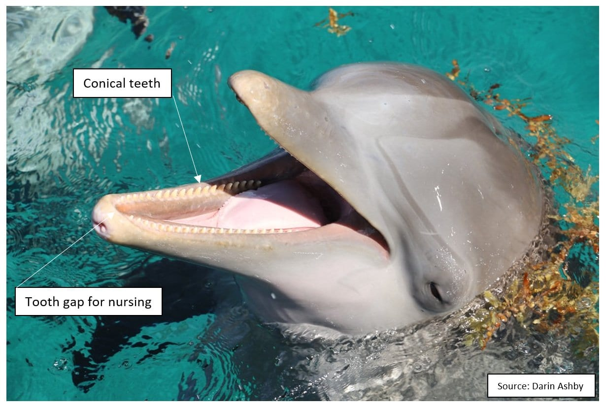 Dolphins Fig 3