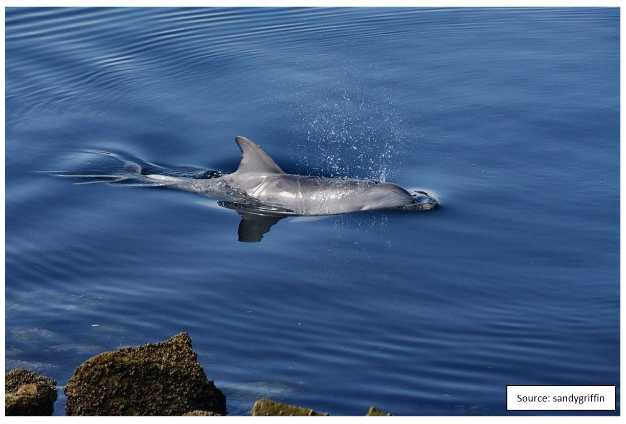 Dolphins Fig 4